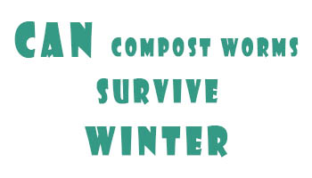 Can Compost Worms Survive Winter?
