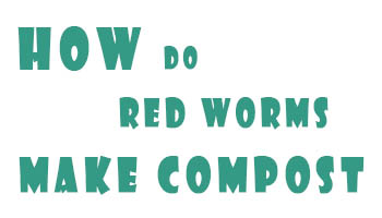 How Do Red Worms Make Compost